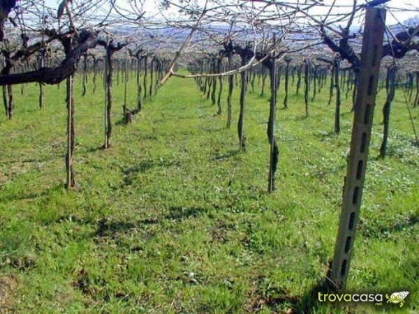 Foto Terreno Agricolo in Vendita a Ripa Teatina