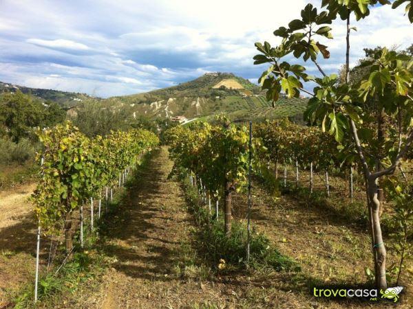 Foto Terreno Agricolo in Vendita a Bucchianico