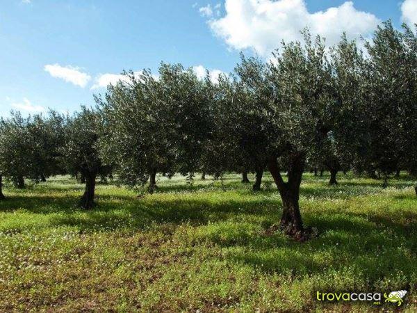 Foto Terreno Agricolo in Vendita a Ortona
