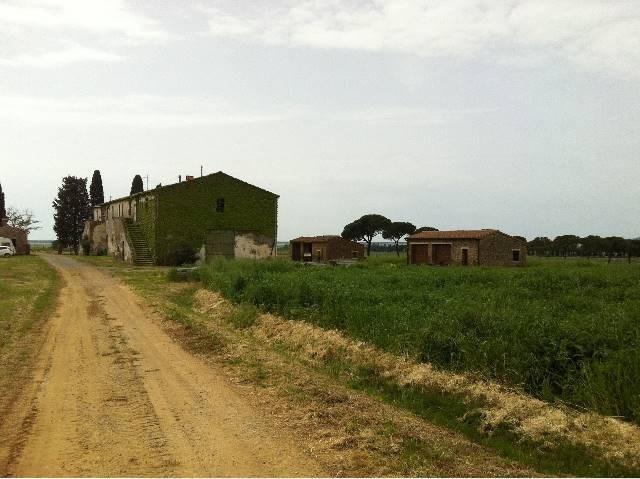 Azienda agricola a Castiglione della Pescaia (4/5)