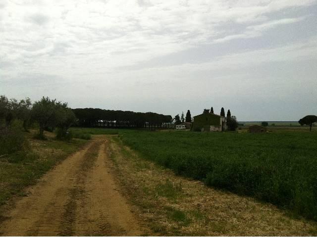 Azienda agricola a Castiglione della Pescaia (2/5)