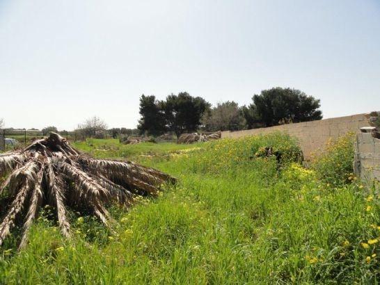 Terreno Agricolo in Vendita Mola di Bari