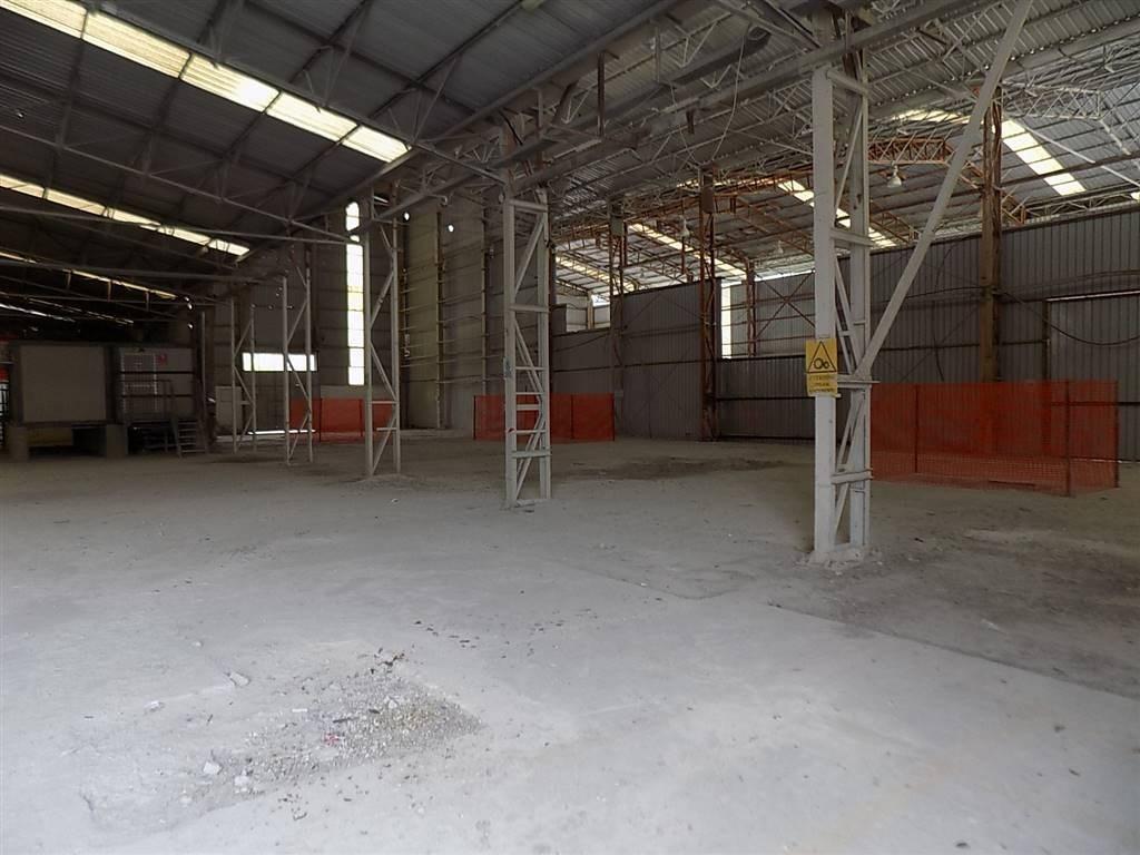 Capannone industriale a Castellina Marittima (4/5)