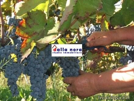 Terreno Agricolo Salgareda 4643181