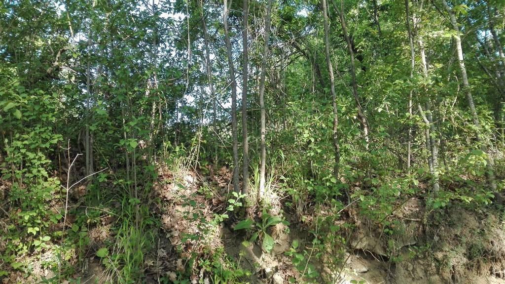 Scurcola Marsicana