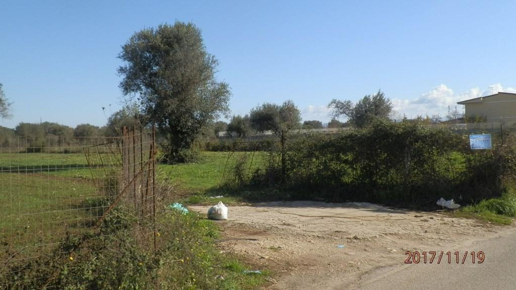 Terreno Agricolo in Vendita Vibo Valentia
